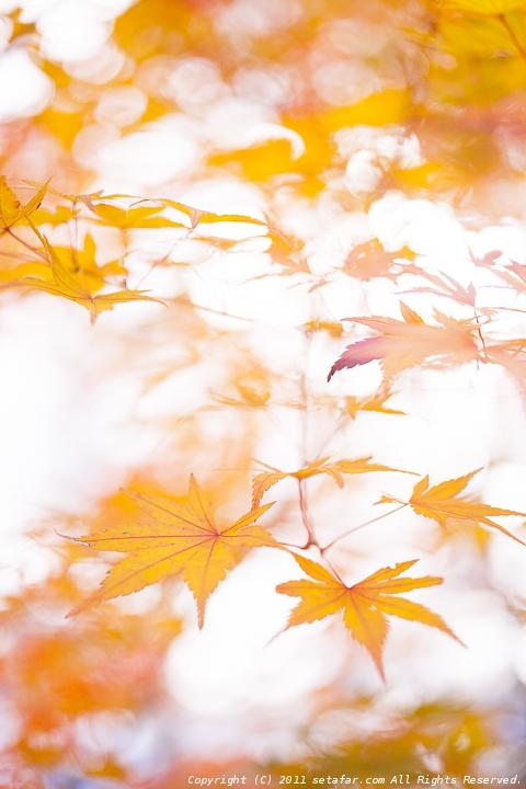 2014_leaf