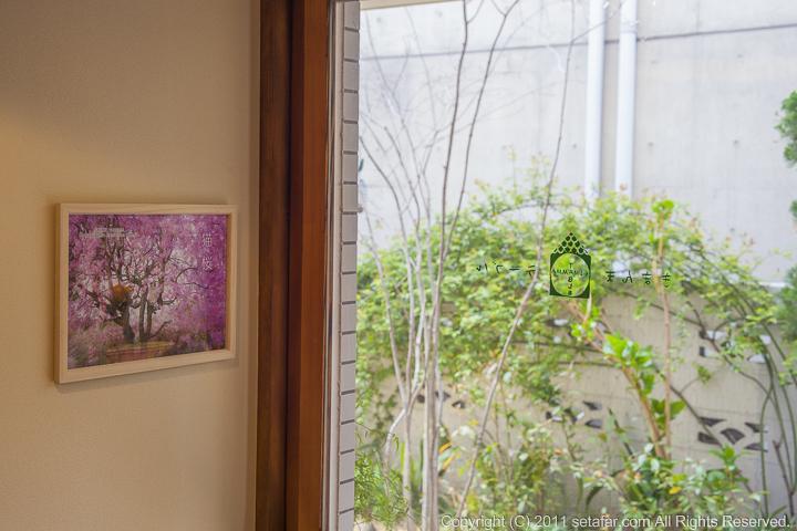 きまんまテーブル「猫桜」